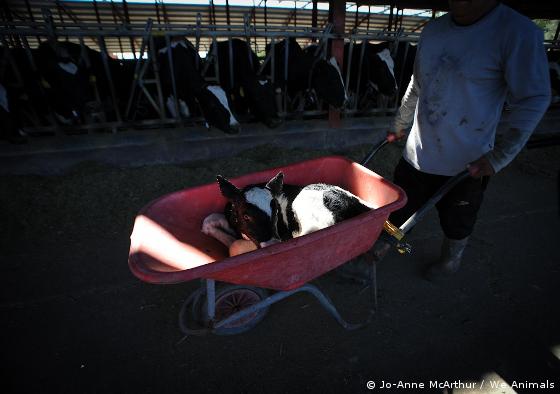 18 причин не употреблять молочные продукты