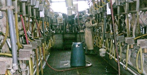 Вся правда о молочной индустрии