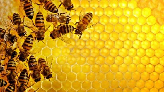 Почему веганы не едят мёд
