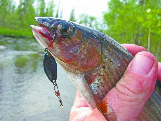 Рыбалка — это садизм!
