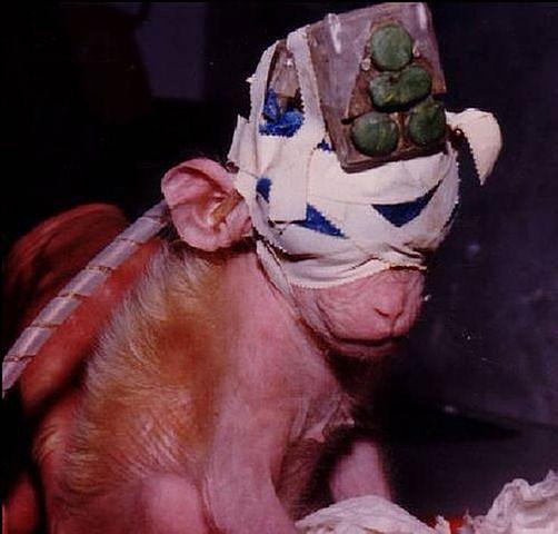 Памела Андерсон отказалась поддержать флешмоб, обвинив учёных в нарушении прав животных