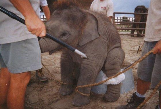 Цирк -  жестокое развлечение