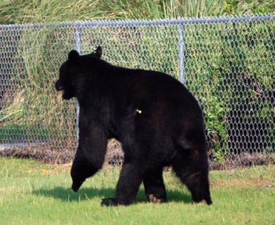 Человек спас медведя, рискуя собственной жизнью