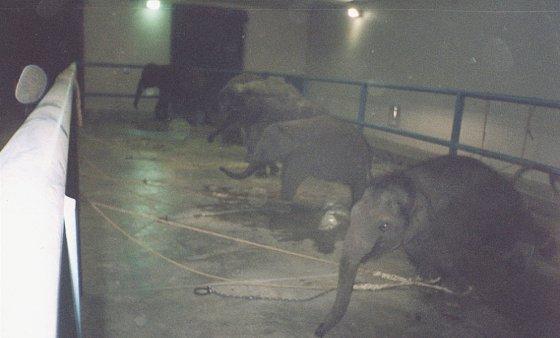 Вся правда о цирке с животными (25 фото)