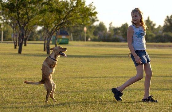 Удивительная  собака без передних лап
