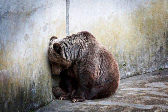 Зоопарк - тюремный приговор на всю жизнь