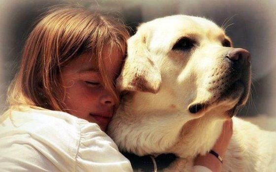 26 августа в США отмечают Национальный день собаки
