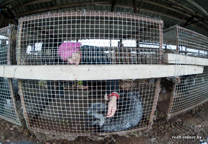 Разведение животных как бизнес в домашних условиях 812