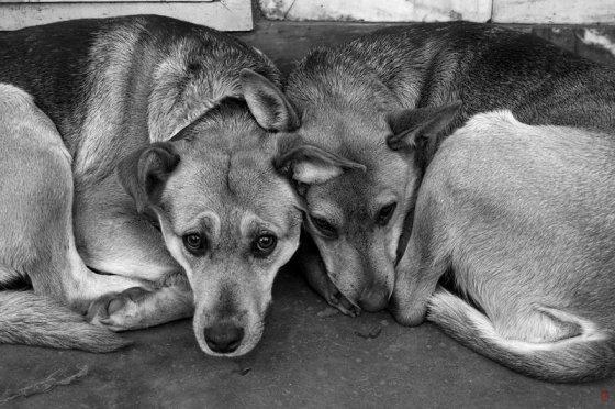 Суд Белгорода признал незаконной деятельность фирм, занимающихся отловом бездомных животных
