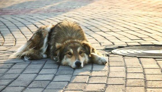 Год тюрьмы за брошенное животное в Италии