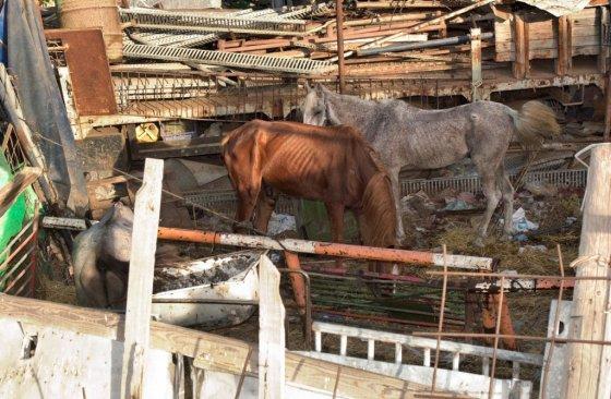 Израиль стал первой страной в мире, запретившей эксплуатацию лошадей, запряжённых в повозки