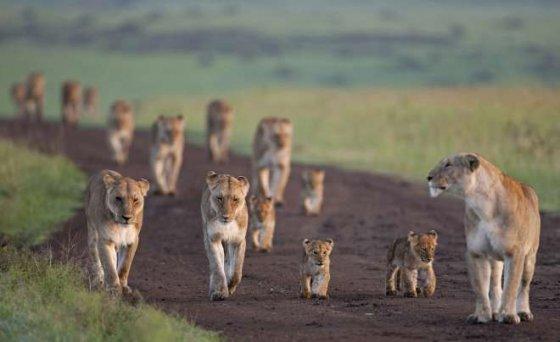 Мировая популяция диких животных сократилась вдвое с 1970 года