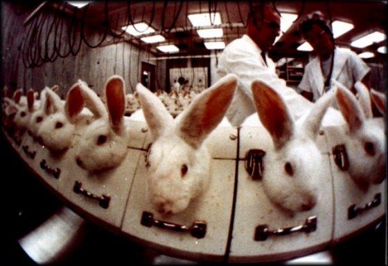 Сколько животных убивают люди?