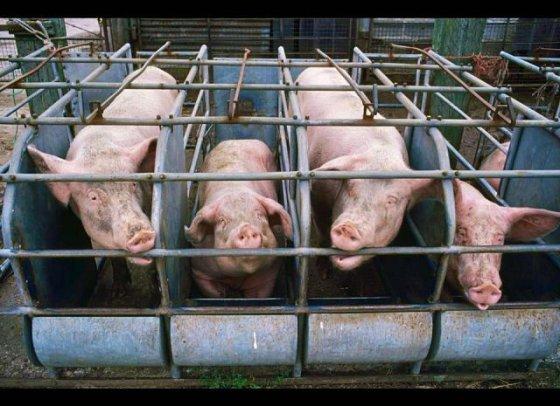 Как почувствовать чужую боль: акция HSUS в защиту животных