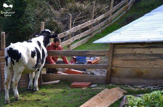 Приют для животных в Испании Santuario Gaia