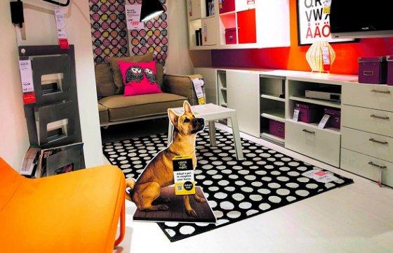 IKEA помогает бездомным животным найти дом
