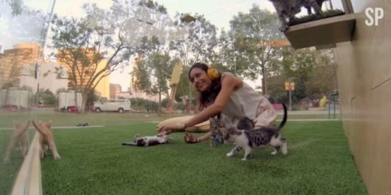 Необычная благотворительная инициатива с котятами из приюта в Лос-Анджелесе