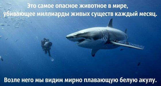 Самое опасное существо на планете: показательная статистика от Джо Чернова