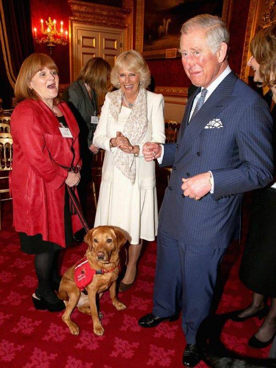 """Лабрадор из Великобритании получил медаль  из рук принца Чарльза за """"вынюхивание"""" раковых опухолей"""