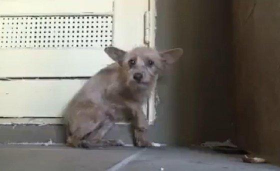 Чудесная история спасения бездомной собачки трогает до слёз