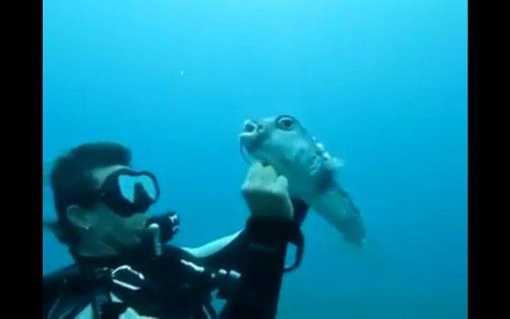 Дайвер пытается вытащить крючок из рыбы (видео)