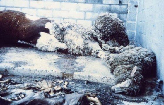 Спасение животных: фото  до и после