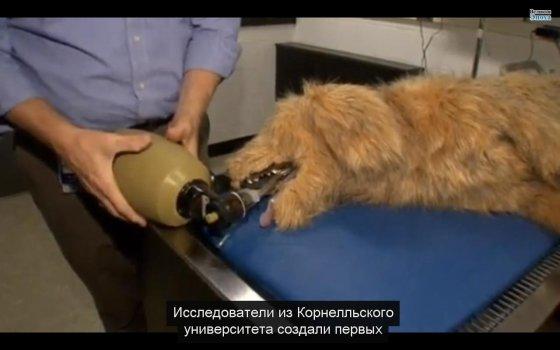Изобретатели создали робота-домашнее животное для обучения ветеринаров (видео)