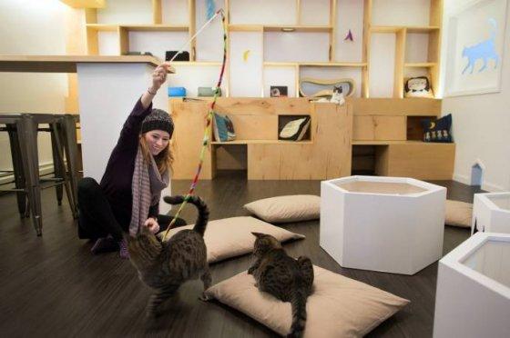 В Нью-Йорке открылось   кафе  с кошками