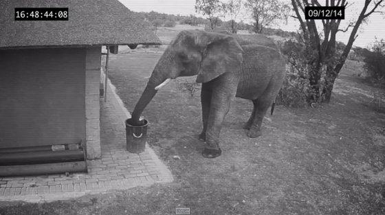 Видеокамера засняла слона, убирающего мусор