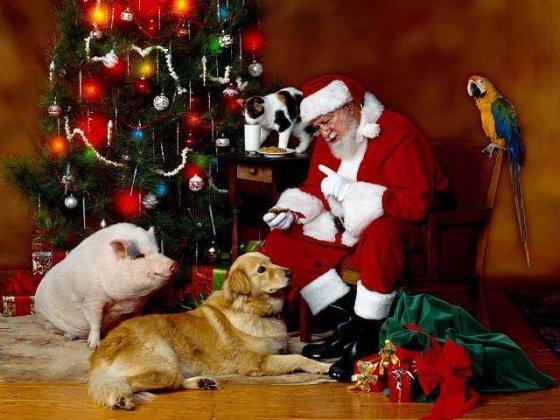 Счастливого Нового года ДЛЯ ВСЕХ живых существ:  животных и людей!