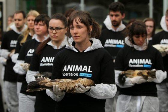 Убийства и эксплуатация животных - чудовищное преступление, возведённое в норму