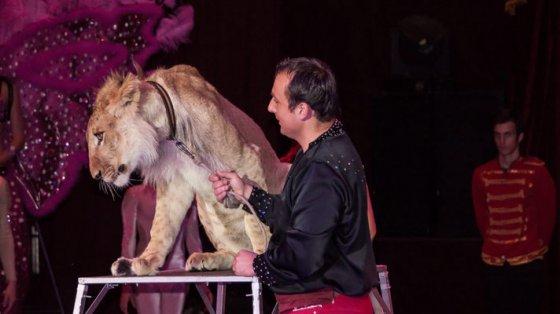 Мексика окончательно запретила использование животных в цирке