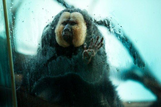 Реальная жизнь животных в зоопарках глазами канадского фотографа Гастона Лакомба