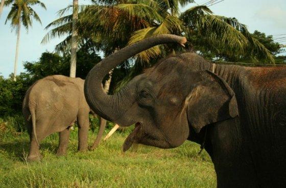 В Таиланде принят закон о защите  животных