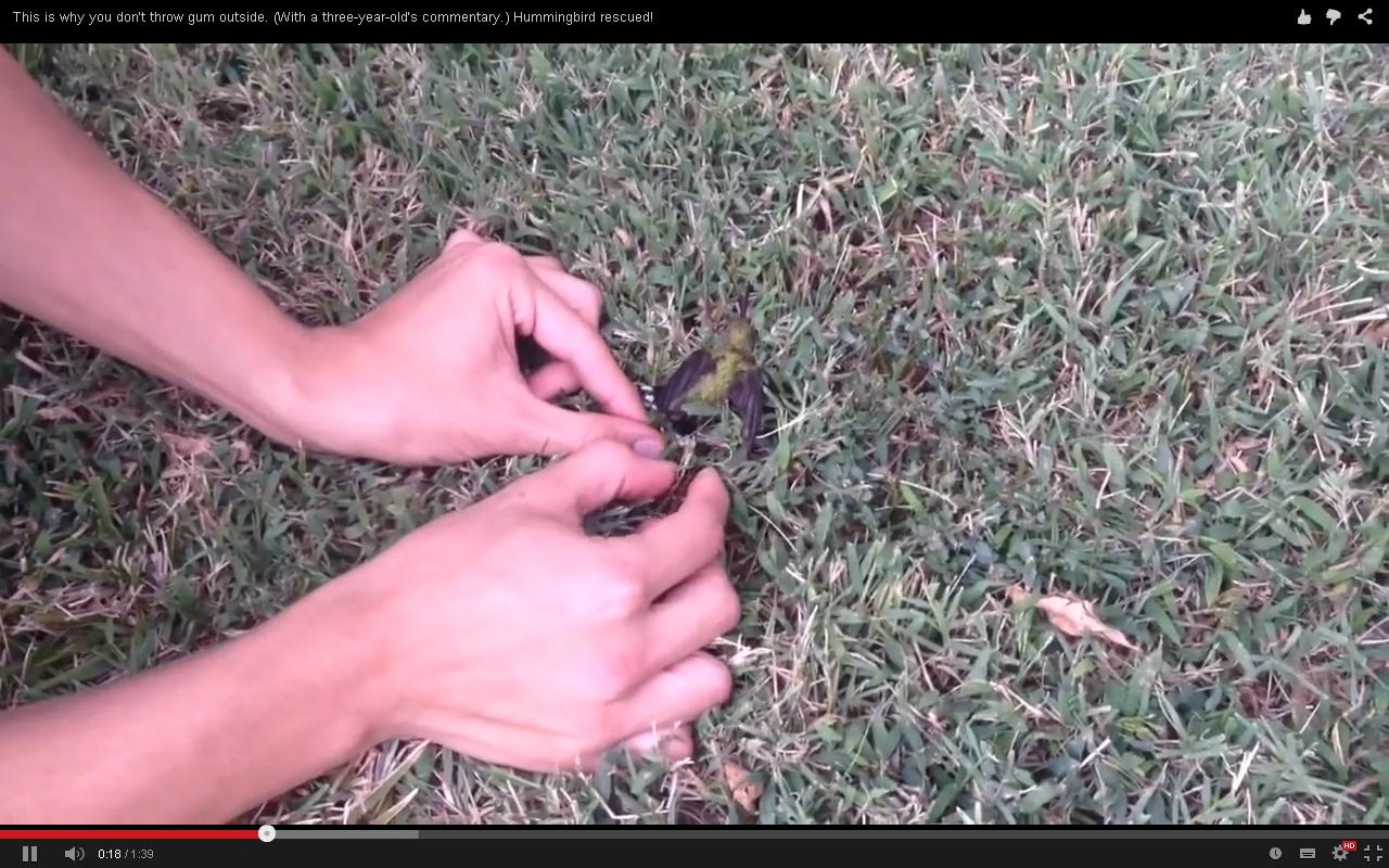 Колибри видео
