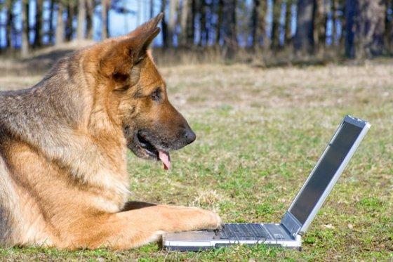 Учёные пришли к выводу: собаки  различают  злые и добрые  лица людей