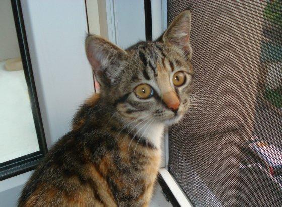 Об опасности приоткрытых окон: как оградить  своих кошек  от неприятностей
