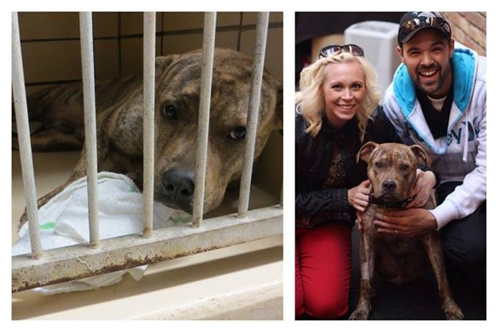 Приют для животных в Москве Кошки, щенки бесплатно