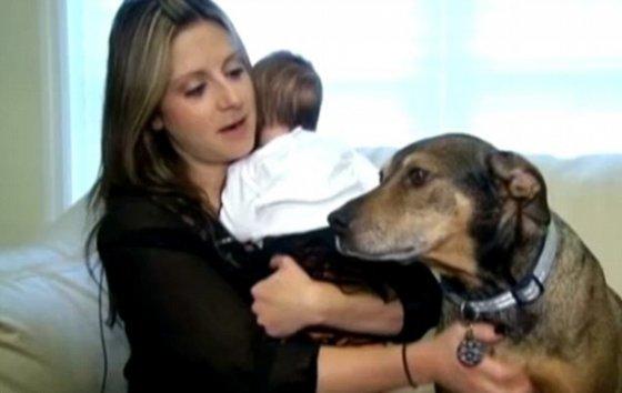 Пёс, которого взяли из приюта, спас ребёнка