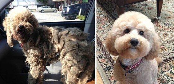 Спасённые собаки «до» и «после»: фото
