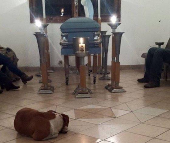 Бездомные собаки пришли на похороны женщины, которая их кормила