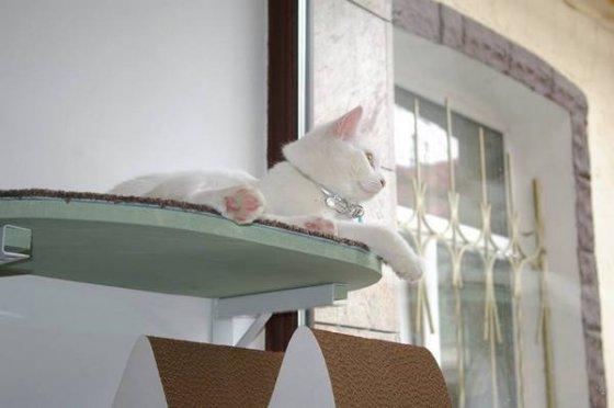 В Москве открылось первое кафе с кошками