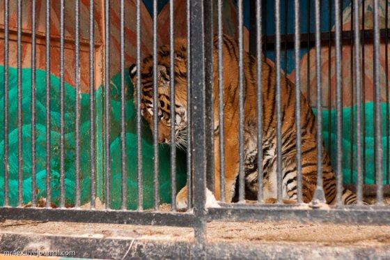 В Украине запретили передвижные зоопарки и выставки диких животных