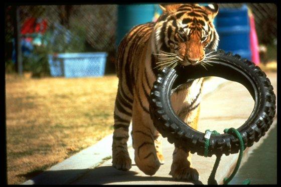 В Сан-Франциско запретили цирки с животными