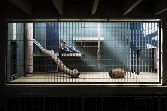 """Провокационные работы французского фотографа """"Люди в зоопарке"""": поставьте себя на место животных"""