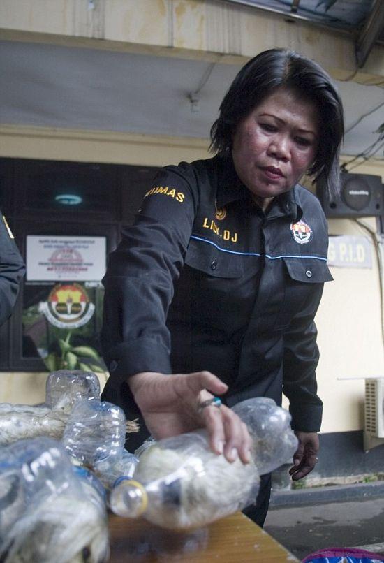 Попугаи в пластиковых бутылках: в Индонезии задержали контрабандистов