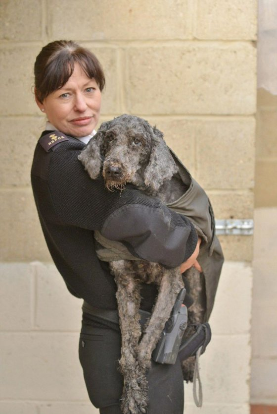 В Винчестере обнаружили и спасли   9 собак в ужасном  состоянии