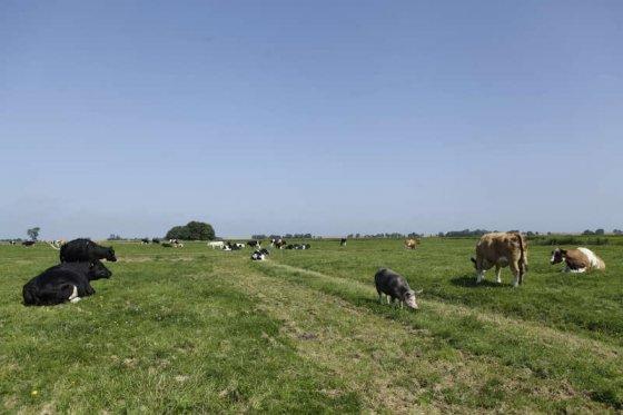 Ферма Hof Butenland в Германии: приют спасённых животных