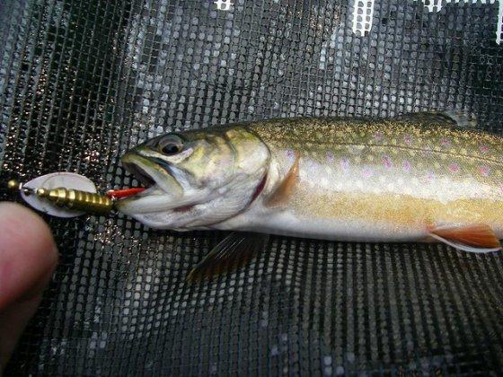 Жестокая рыбалка: веган Хоакин Феникс снялся в ролике против ловли рыбы