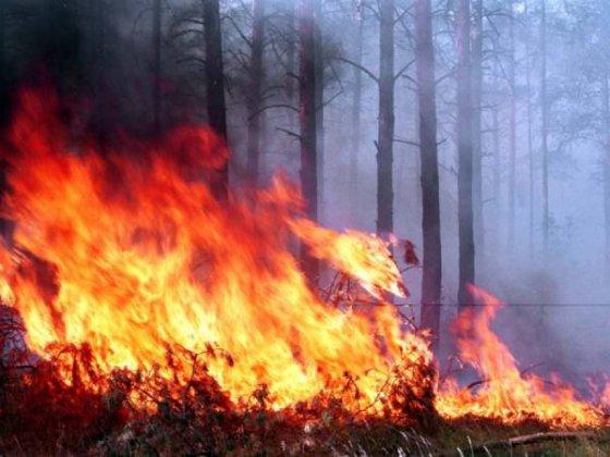 Площадь лесных пожаров в Бурятии за выходные увеличилась в 11 раз